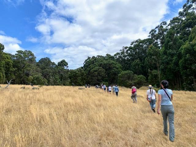 Mindfulness and nature retreat walk