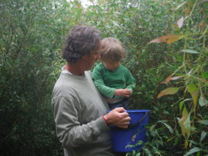 Seed collecting 2
