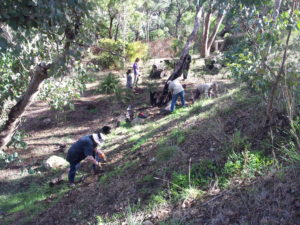 Tree planting day by Tig-Le at the Origins Centre