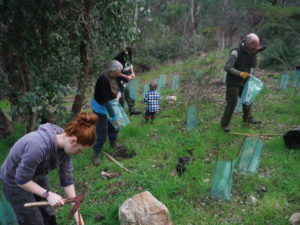 Tree planting organised by Tig-Le House for the Origins Centre