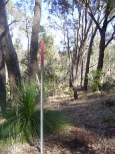 Vegetation transects by Tig-Le at the Origins Centre